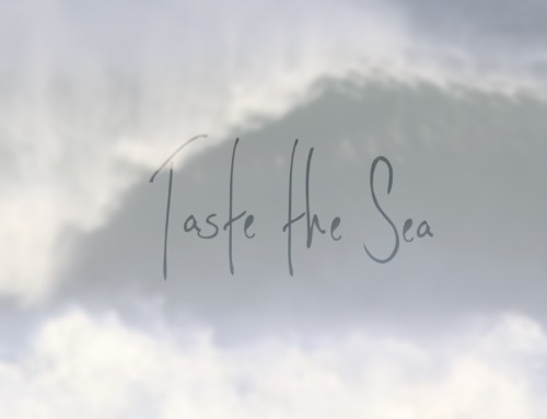 Sligo Food Trail celebrates the Wild Atlantic Way, Launch of new video 'Taste the Sea'
